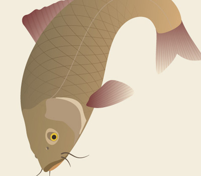 traditional japanese koi carp 80 Excellent Adobe Illustrator Cartoon Tutorials