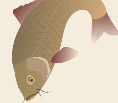 traditional japanese koi carp 40+ Excellent Adobe Illustrator Cartoon Tutorials
