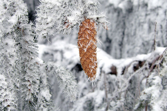 Beautiful Photographs of Winter (139)