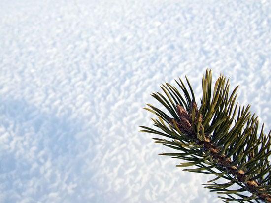Beautiful Photographs of Winter (134)