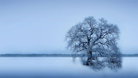 Beautiful Photographs of Winter (141)