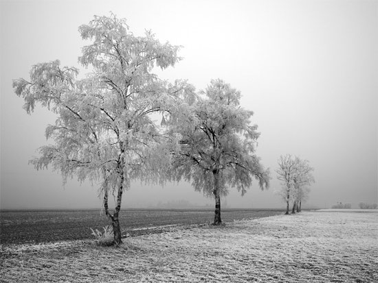 Beautiful Photographs of Winter (143)