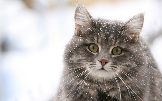 Beautiful Photographs of Winter (123)