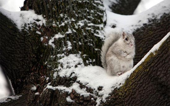 Beautiful Photographs of Winter (119)