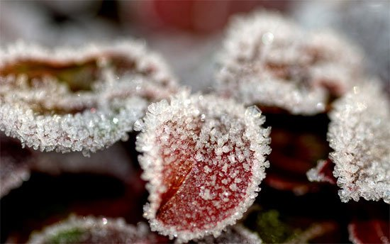 Beautiful Photographs of Winter (117)