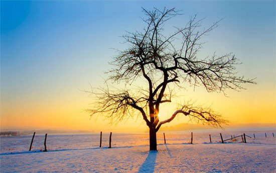 Beautiful Photographs of Winter (111)