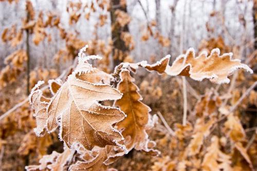 Beautiful Photographs of Winter (101)
