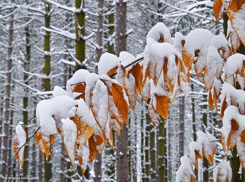 Beautiful Photographs of Winter (99)