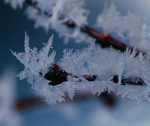 Beautiful Photographs of Winter (97)