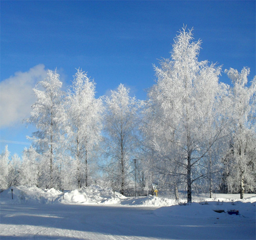 Beautiful Photographs of Winter (96)