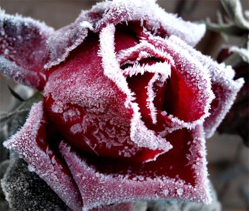 Beautiful Photographs of Winter (95)