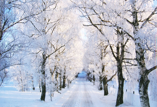 Beautiful Photographs of Winter (94)