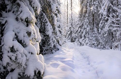 Beautiful Photographs of Winter (93)