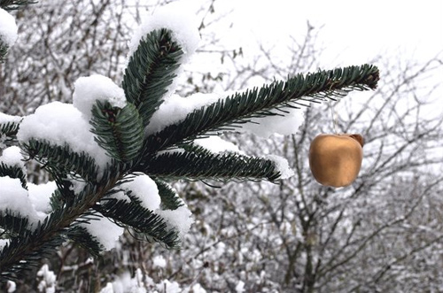 Beautiful Photographs of Winter (92)