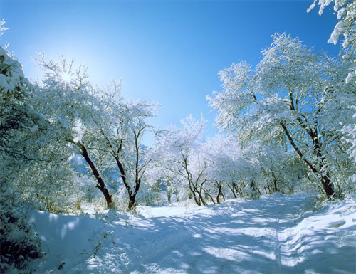 Beautiful Photographs of Winter (89)