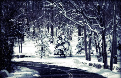 Beautiful Photographs of Winter (62)
