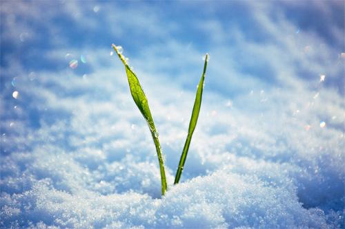Beautiful Photographs of Winter (88)