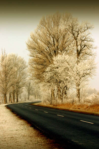 Beautiful Photographs of Winter (14)