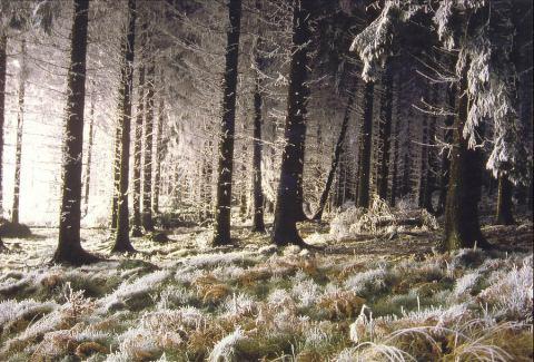 Beautiful Photographs of Winter (18)