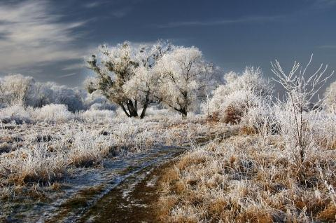 Beautiful Photographs of Winter (22)