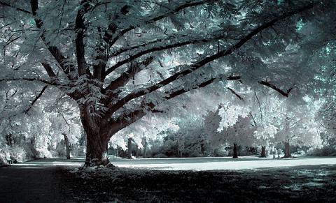 Beautiful Photographs of Winter (19)