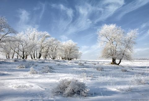 Beautiful Photographs of Winter (6)