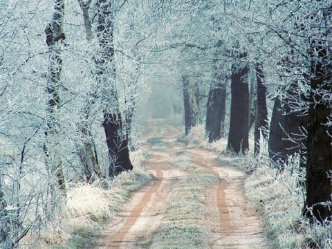 Beautiful Photographs of Winter (9)
