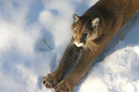 Beautiful Photographs of Winter (28)