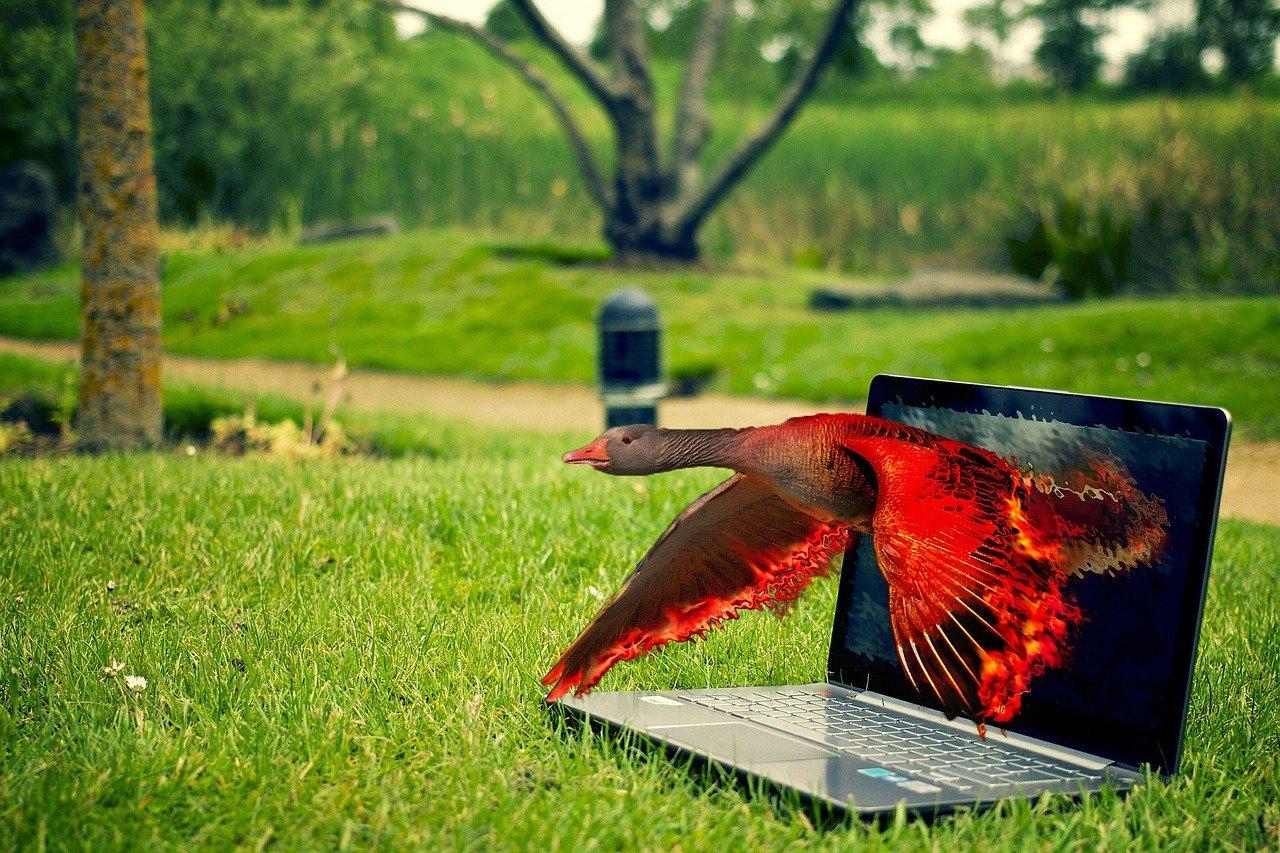 best free photo editing websites