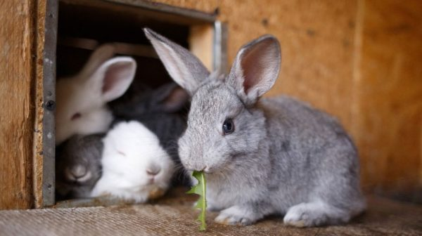 Rabbit Farming has Low Investment and High Income