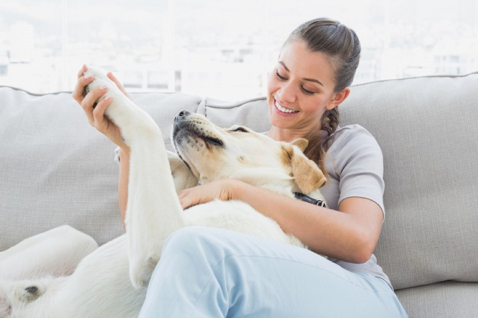 Basics for a Pet-Owning