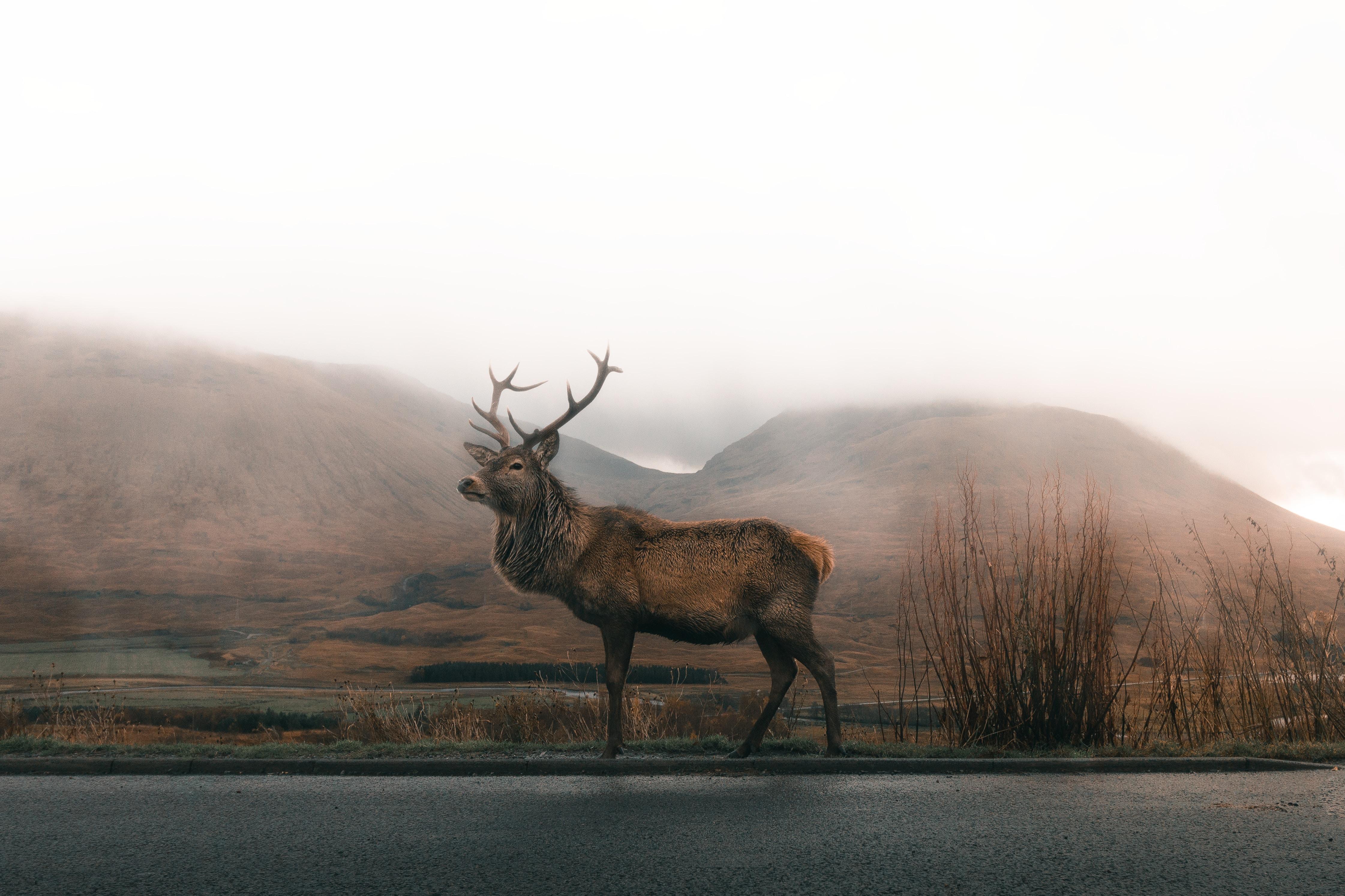 Hunting Trip Destinations