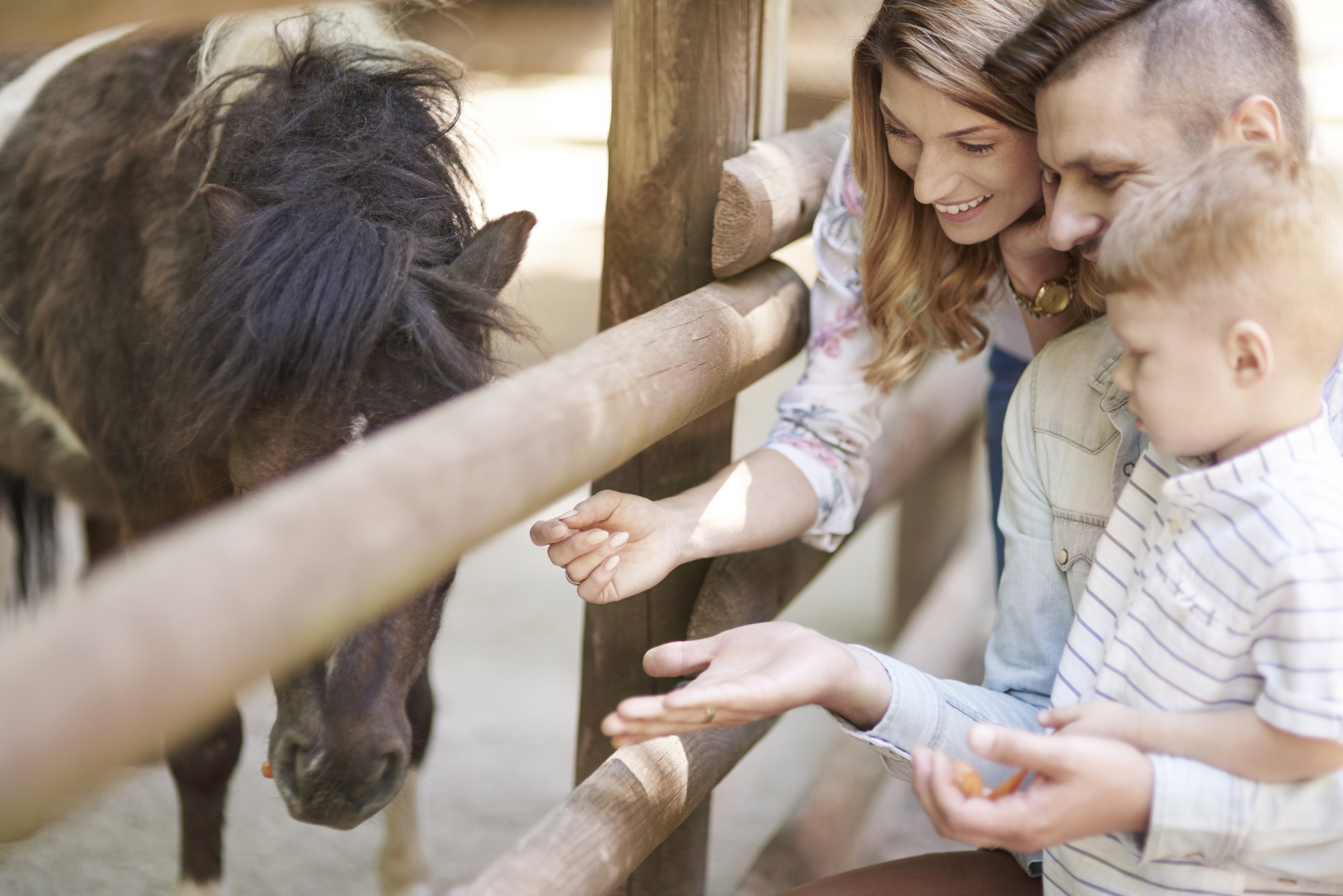Feeding little horse at the zoo