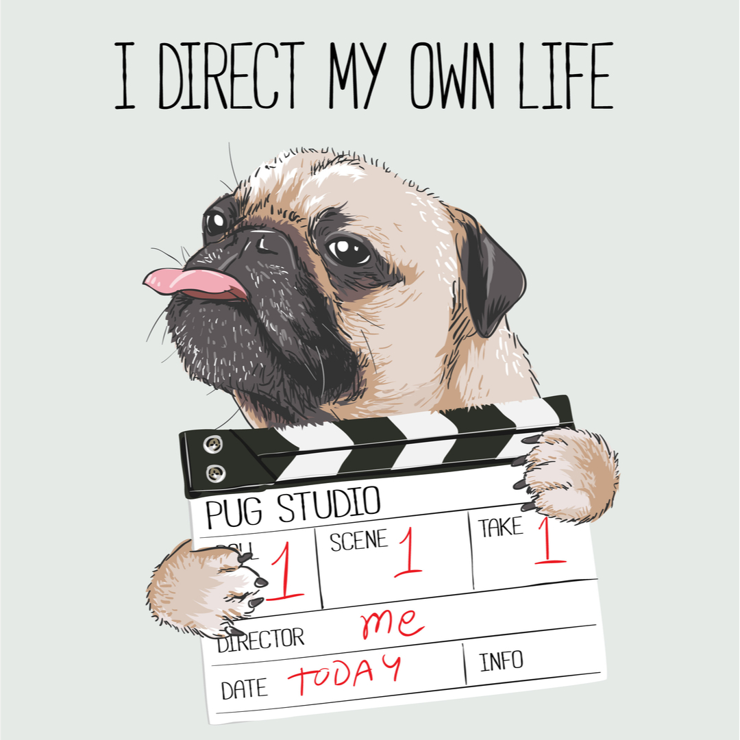 Funny dp pug with director slate