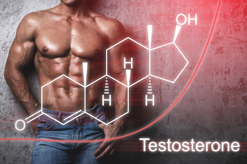 increase testosterone