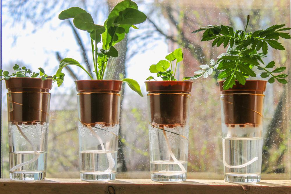Self Watering Plants2