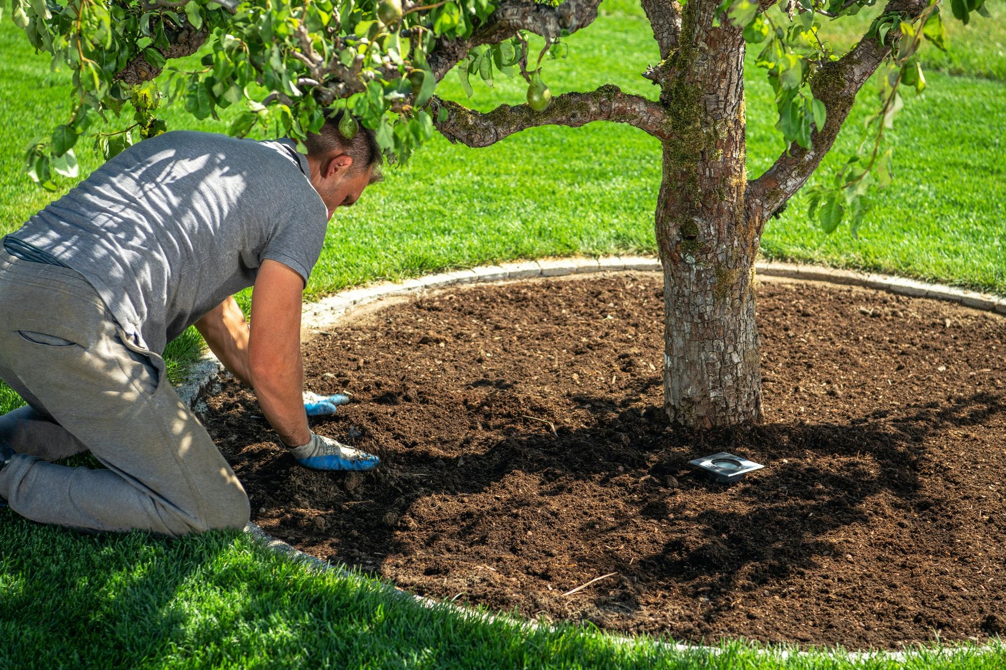 Men Redesigning His Garden Creating Circle Around Pear Tree