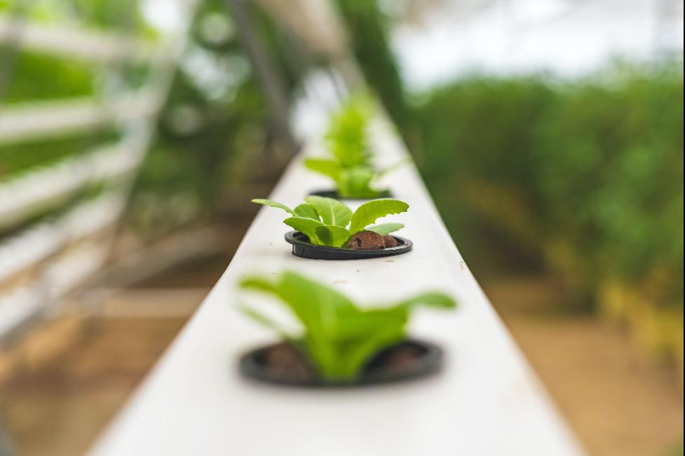 Growing Plants Indoor Using Aquaponics