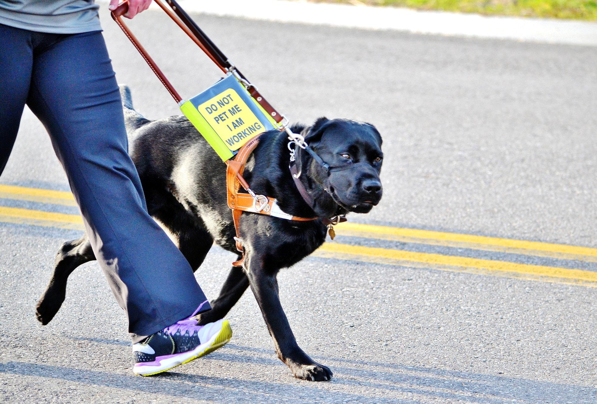 Service dog in a 5k!