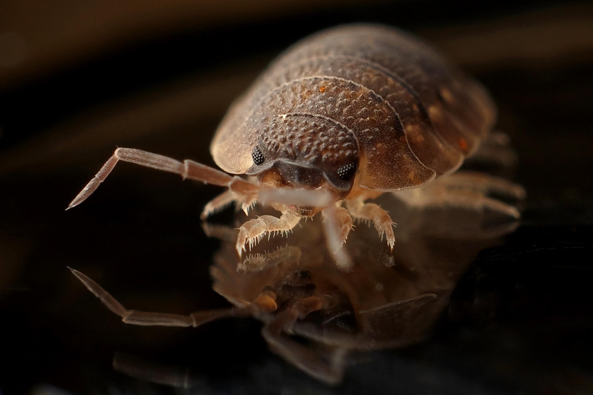 Pest Repellers