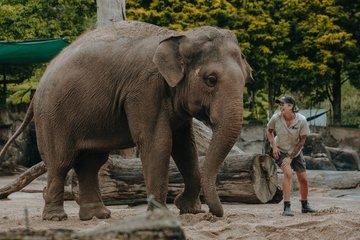 NZ to move its only 2 elephants to Aus