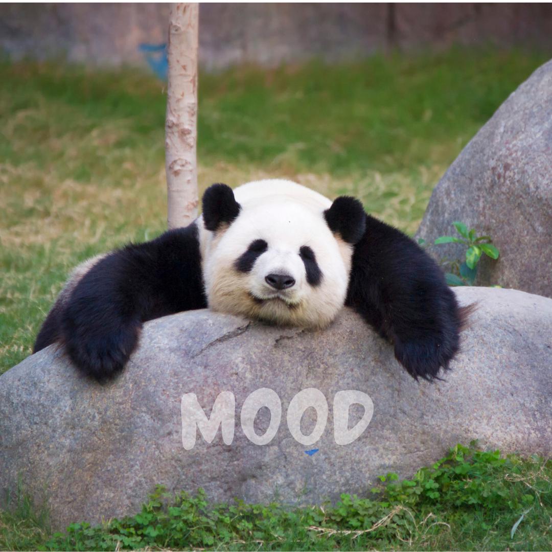 Mood-Just Like Tired Panda