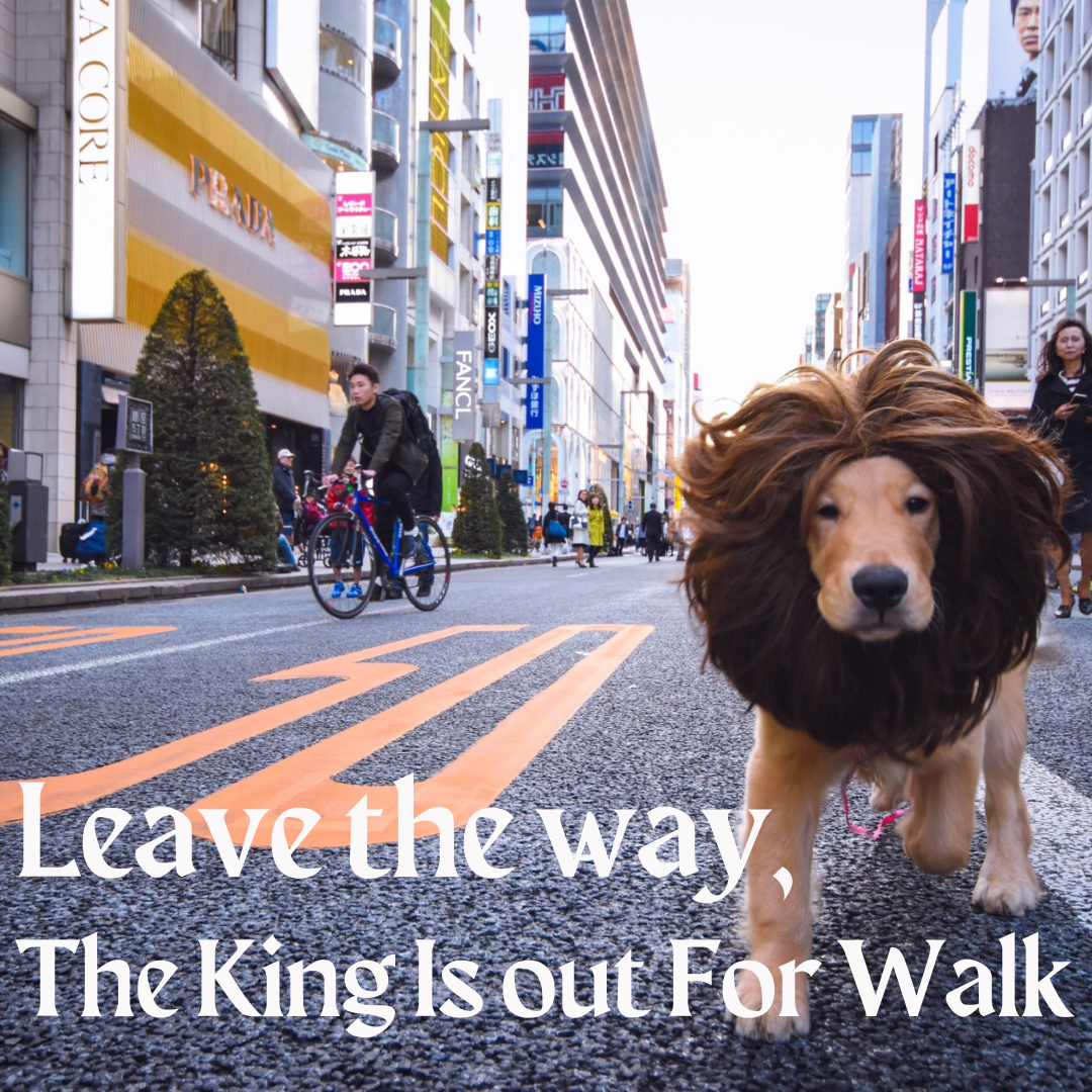 Leave The Way, The King Is Out For Walk...Funny