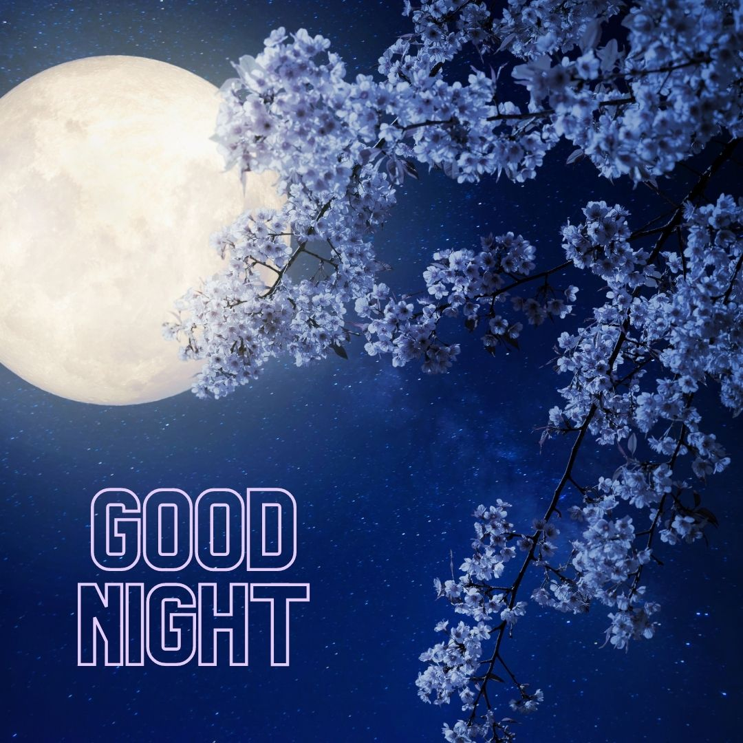 Good Night and purple leaves